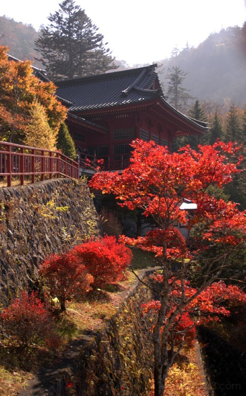 temple in nikko and autumn/fall leaves