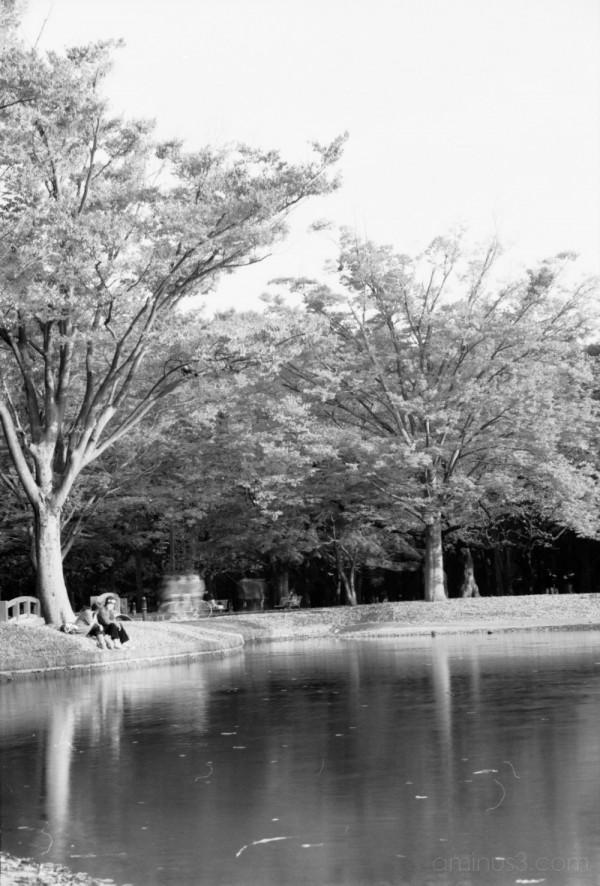 park japan nature tokyo 公園 代々木