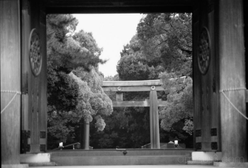 gate and temple 寺とゲート (harajuku, japan)