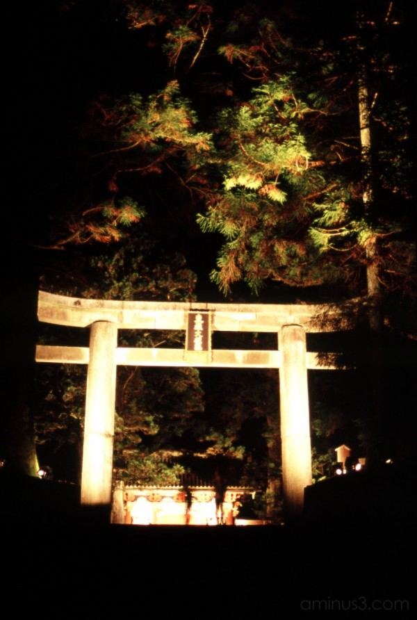night torii gate nikko 日光 もみじ 紅葉 湖 鳥居 pine forest