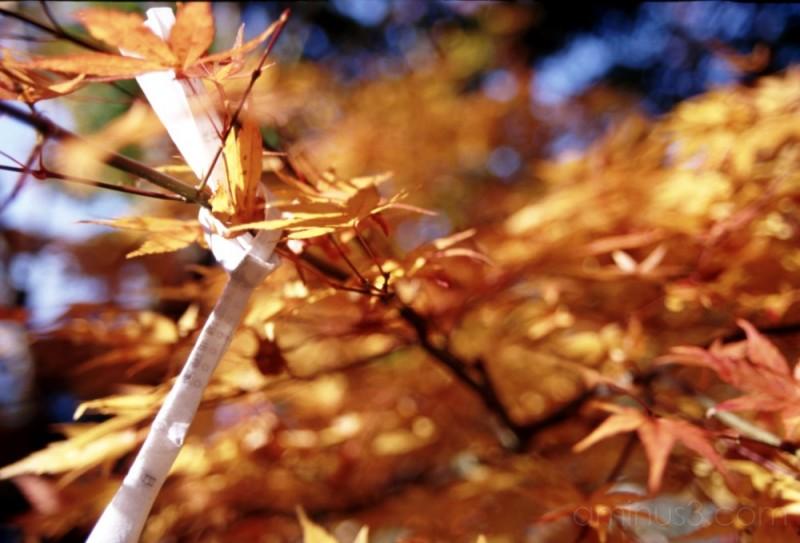 sky lake leaves fall nikko 日光 もみじ 紅葉 湖