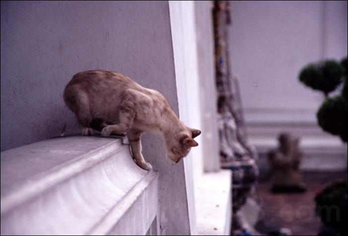 cat climbing wall in bankok thailan バンコク タイ