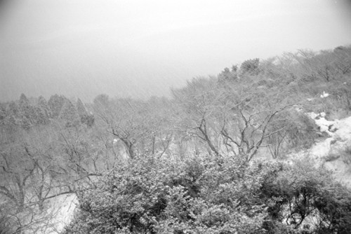 snow covered trees in atami 伊豆 熱海 雪