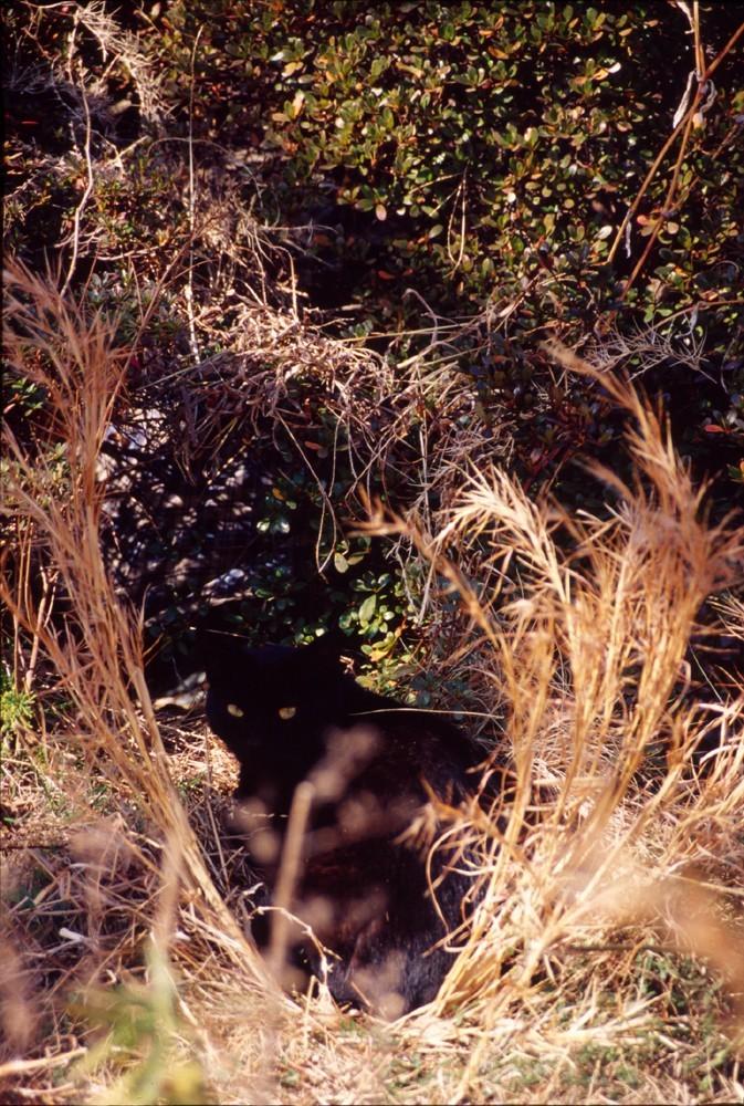 cat grass tokyo eyes feline mystery 黒猫写真 黒猫