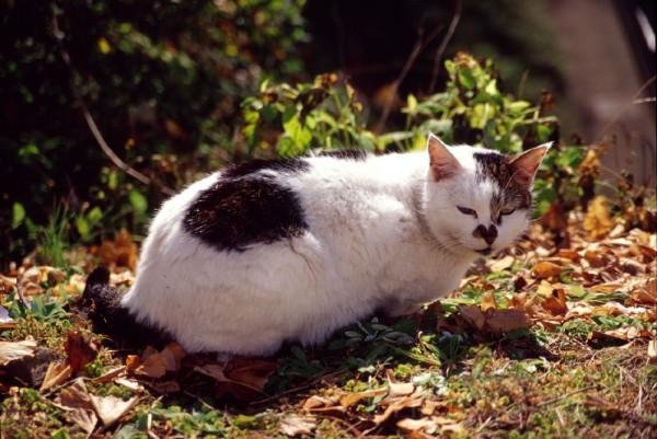 grass cat eyes tokyo mysterious feline mystery 猫