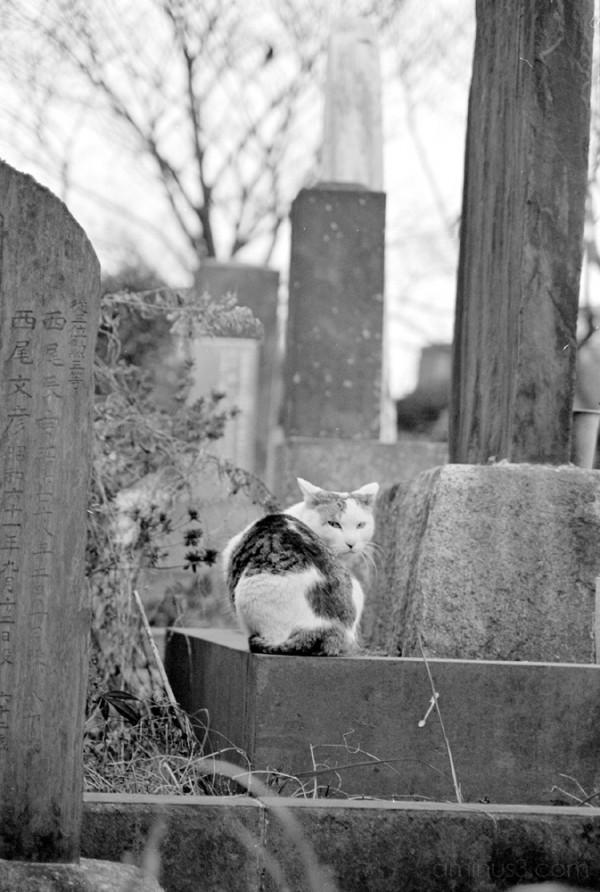 cat tokyo grave graveyard cemetery temple