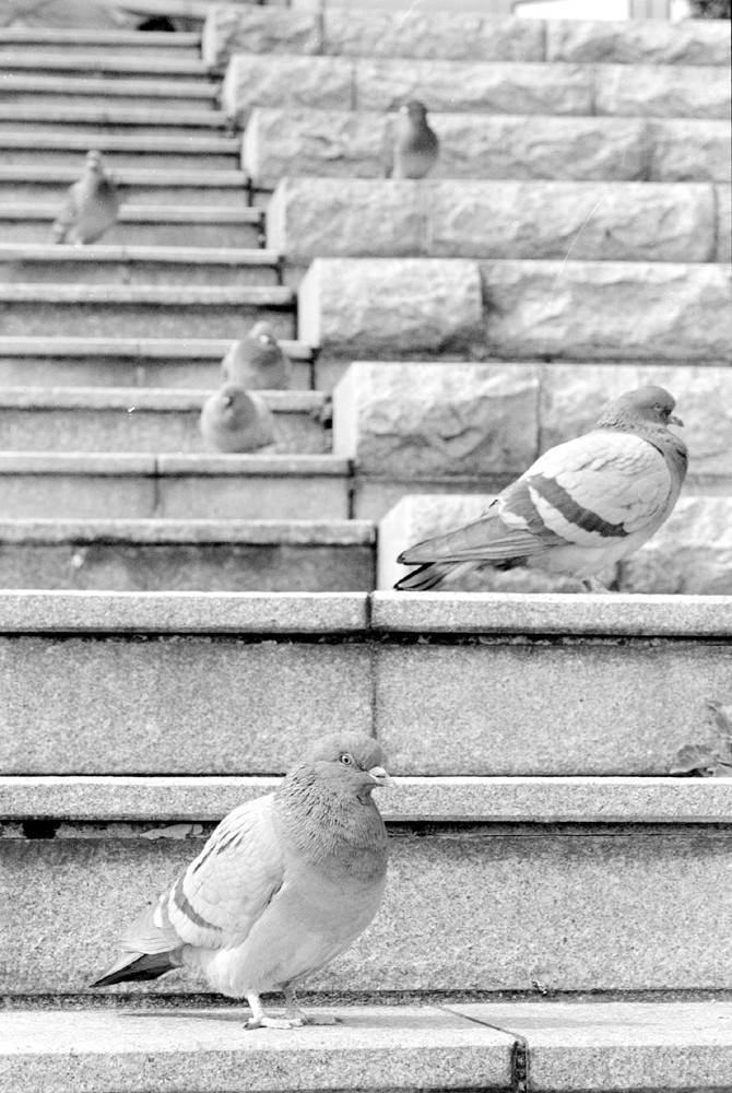 pigeons sitting on stone steps
