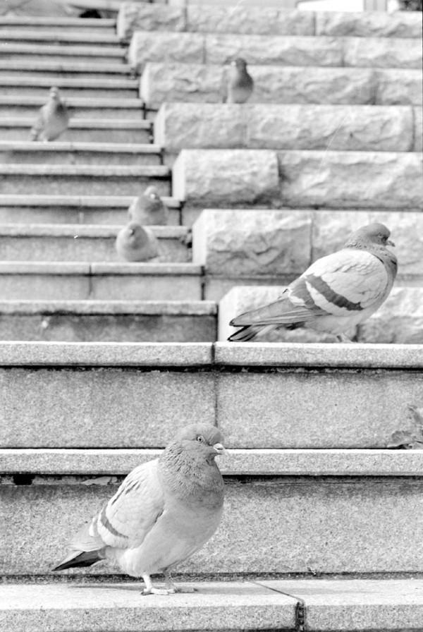 pigeons sitting on stone steps