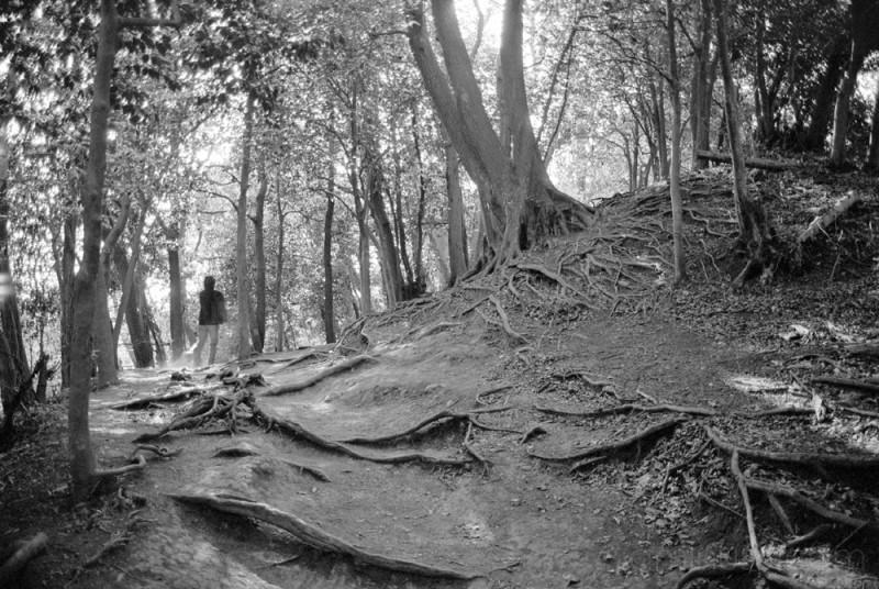 kamakura hiking trees tree 写真 japan 鎌倉 湘南 逗子 横浜