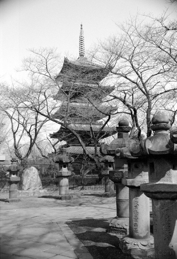 ueno statues pagoda 上野 フォトブログ tokyo saura 桜