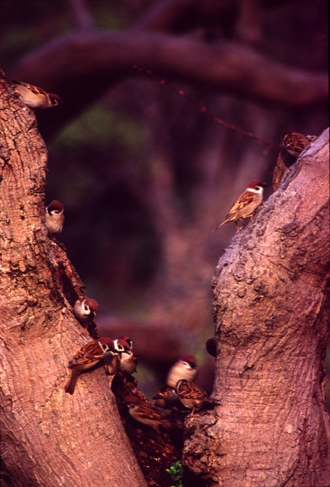 chirping spring bird tree tokyo 東京 鳥 花 小石川後楽園