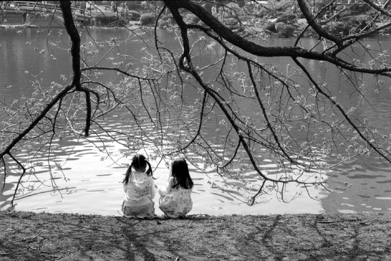 桜 花 子供 新宿 新宿行縁 池 花見 flowers children sakura hanami
