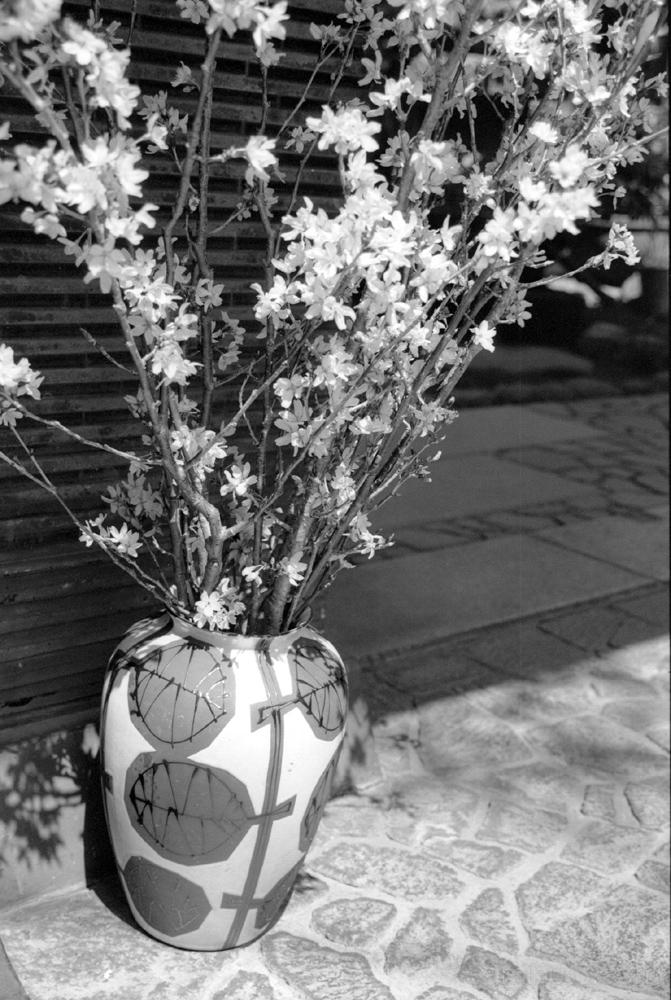 cherry blossoms in vase  花瓶 花 桜 浅草