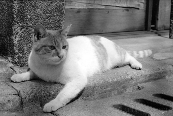 cat kitten on the sidewalk asakusa chat gato 猫 고양이