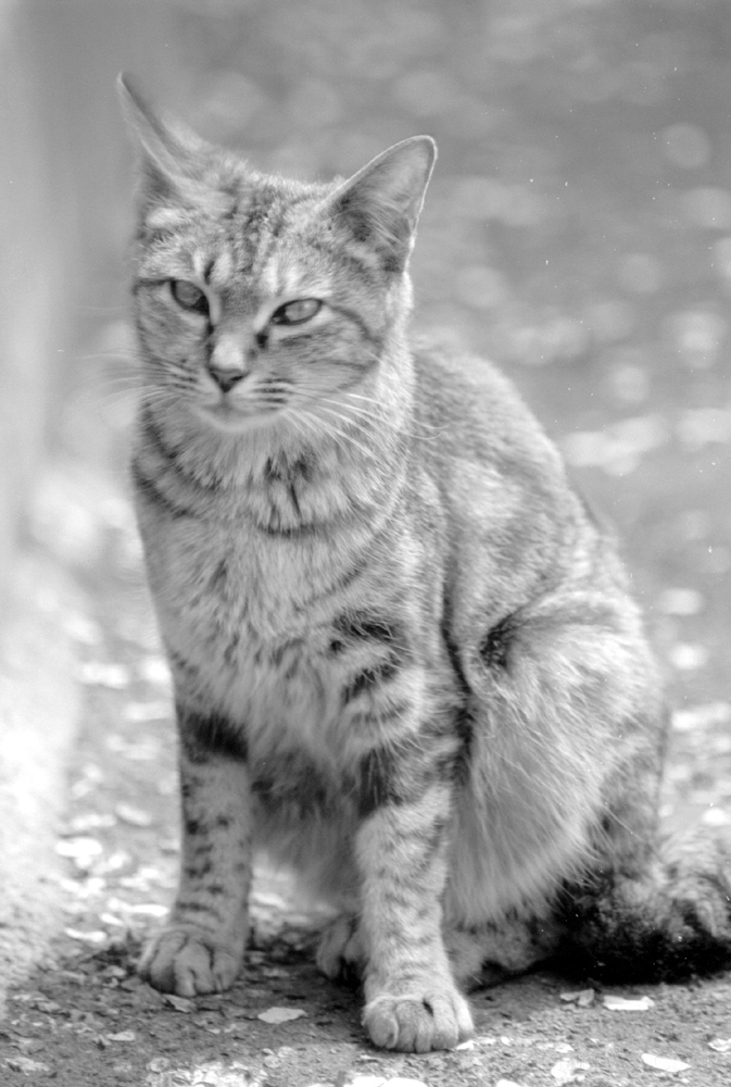 cat tokyo asakusa 猫 浅草 बिल्ली кошка طوكيو قطة