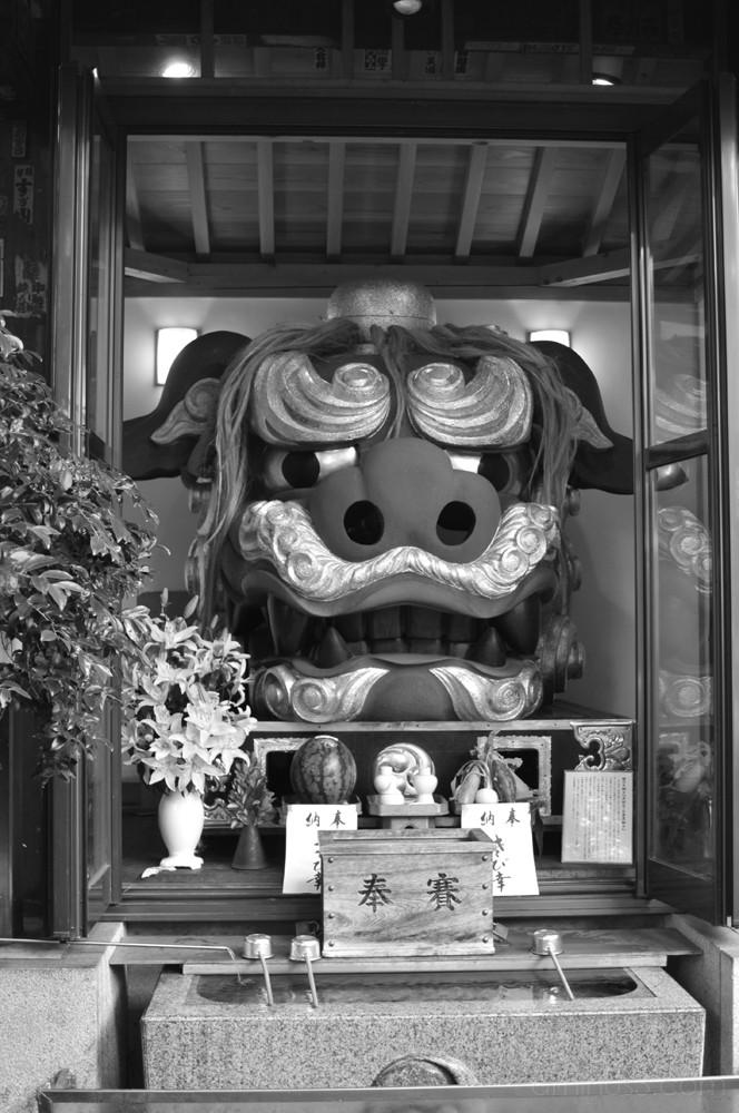 tsukiji lion dog