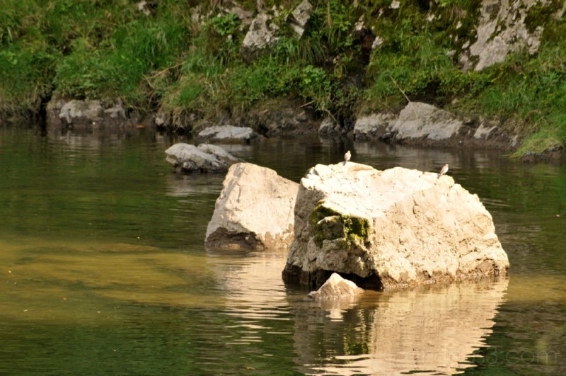 river rocks gifu 鳥 tajimi eihoji 永保寺 temple 寺 土岐川