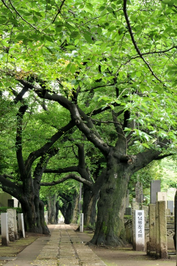 trees ueno path 森 木 緑 上野 小道