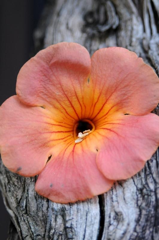 花 flowers tree 木