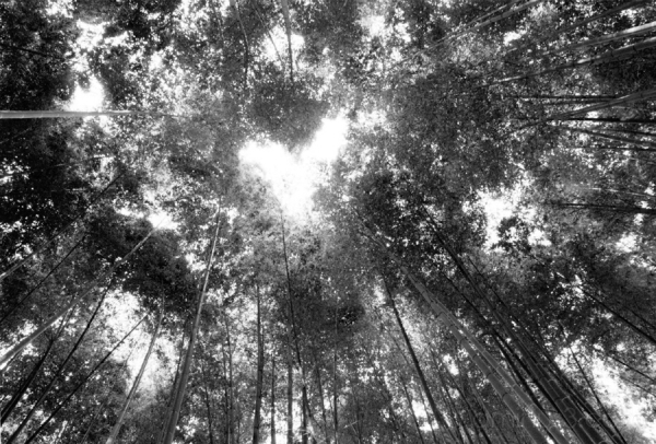 japanese bamboo garden trees 竹 木 forest 森