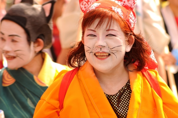 cat 猫 festival asakusa samba 浅草 女 祭 サンバ dance ダンス