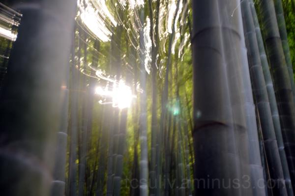 bamboo garden in kamakura竹 苔 鎌倉 meigetsuin 明月院
