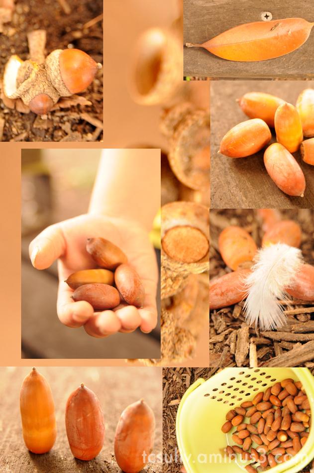 団栗 どんぐり acorn park 公園 macro マクロ