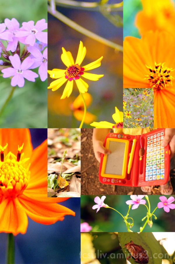 flowers wildflowers sumida 花 墨田 park 公園 macro マクロ