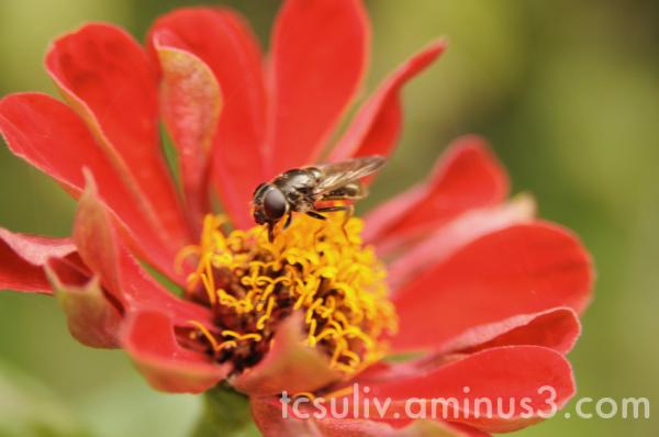 fee flower insect 虫 花 ハチ 蜂 kitakamakura 北鎌倉 建長寺 ma