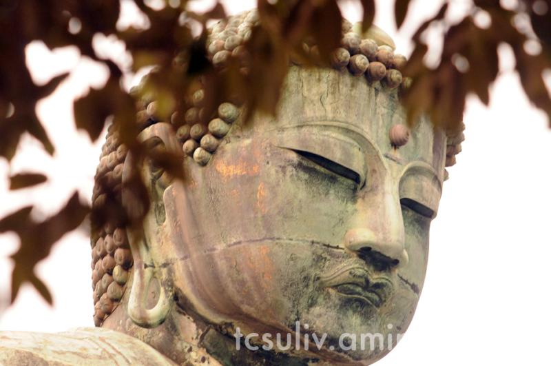大仏 鎌倉 daibutsu buddha kamakura momiji 紅葉 もみじ