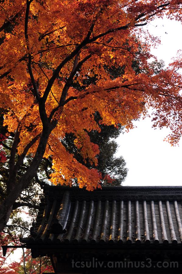 leaf autumn kyoto momiji 紅葉 葉 秋 寺 roof 屋上