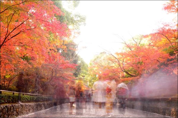 leaf autumn kyoto momiji kimino temple