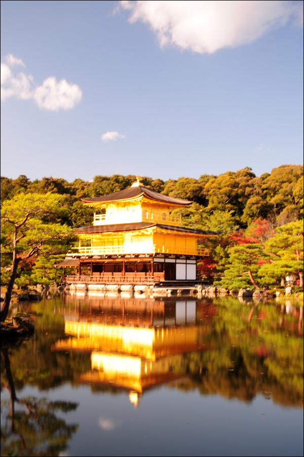 leaf autumn kyoto temple kinkakuji 京都 寺 金閣寺