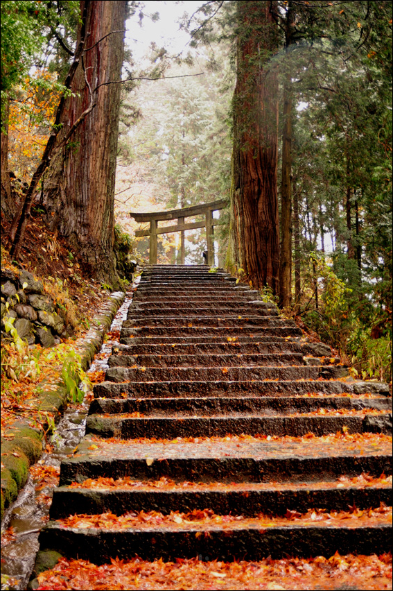 stairway torii autumn nikko 自然の写真 日光観光 環境 美しい日本