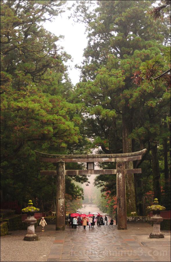 temple umbrella torii toshogu nikko 日光 東照宮 鳥居 傘 寺