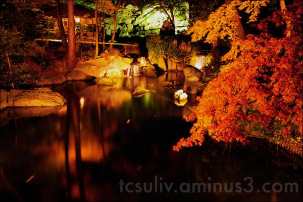 autumn leaves 紅葉 rikugien 六義園 japanese garden