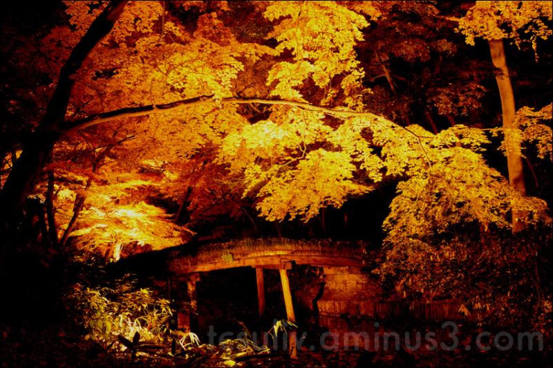 autumn leaves 紅葉 もみじ 秋 rikugien 六義園 tokyo parks