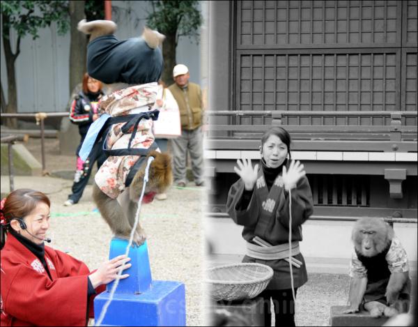 snow monkey show picture snow さる サル 猿 asakusa 浅草