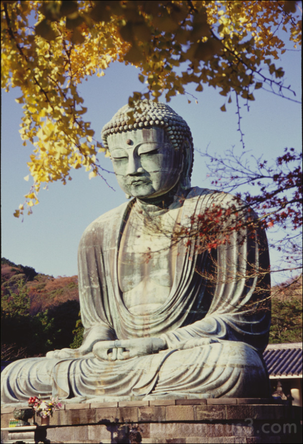 daibutsu buddha kamakura 鎌倉 仏 大仏