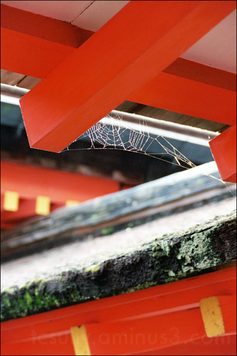 spiderweb at miajima temple in hiroshima 蜘蛛の巣 宮島