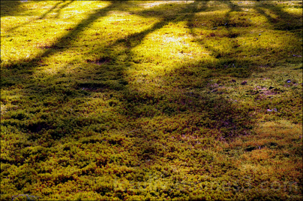 shadows on moss at kanazawa's kenrokuen