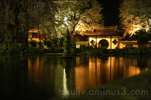 sakura and pond gifu reflection