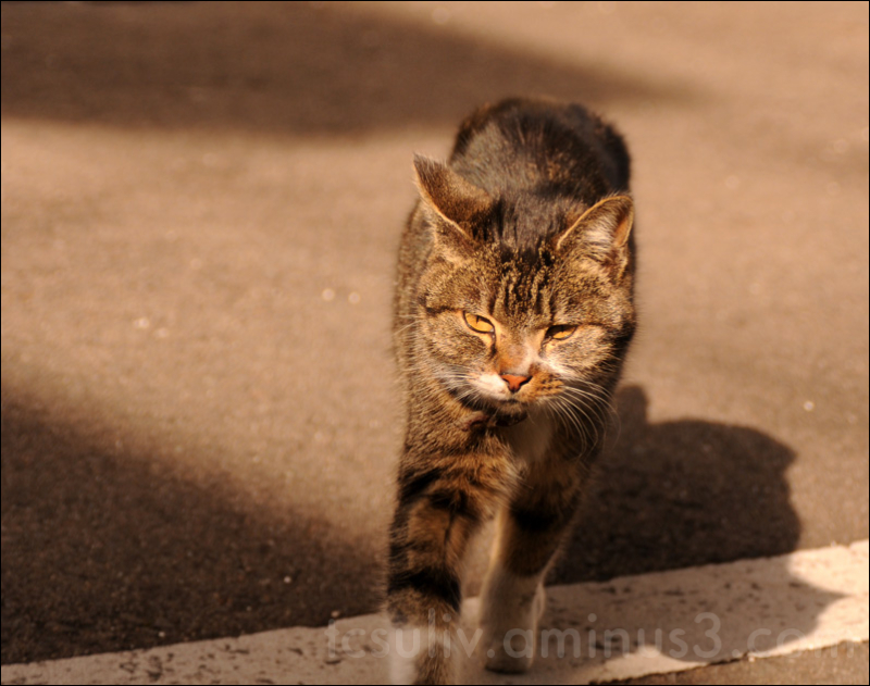 cat in sunshine 猫