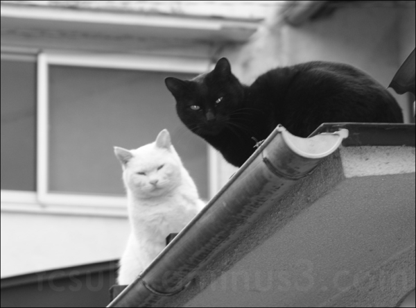 two cats sit atop a Japanese home roof