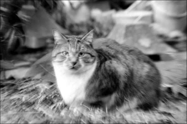 tokyo street cat 猫