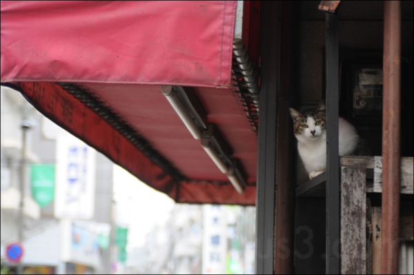cat sitting on top of a shop roof in shinbashi