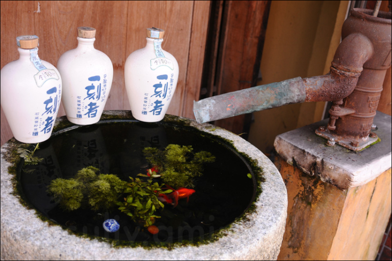 goldfish swimming near sake bottles