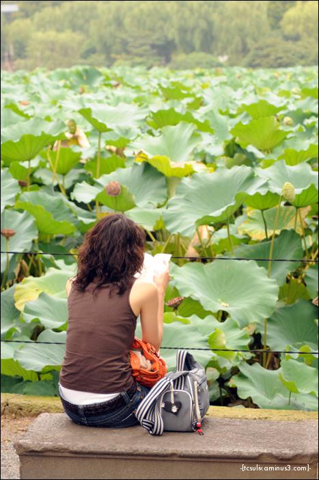 blooming lotus 咲いてる蓮 (ueno)