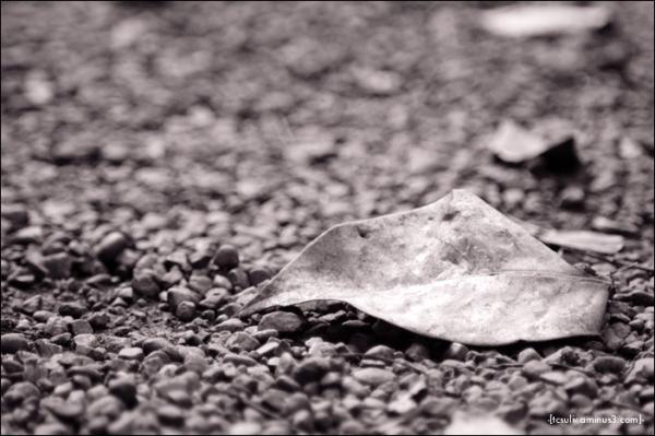 gravel and leaf 小石と葉っぱ (harajuku)