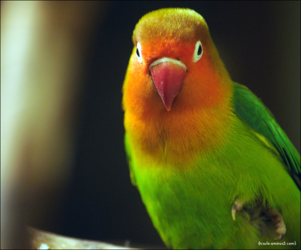 bird of rainbow feathers (ueno, japan)